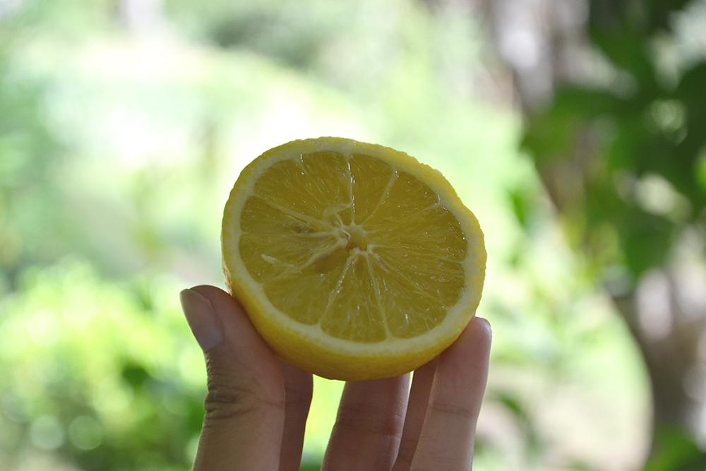 citron-ongle-jaune-1