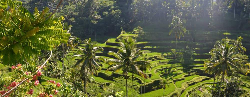 Vie Green - Voyage à Bali